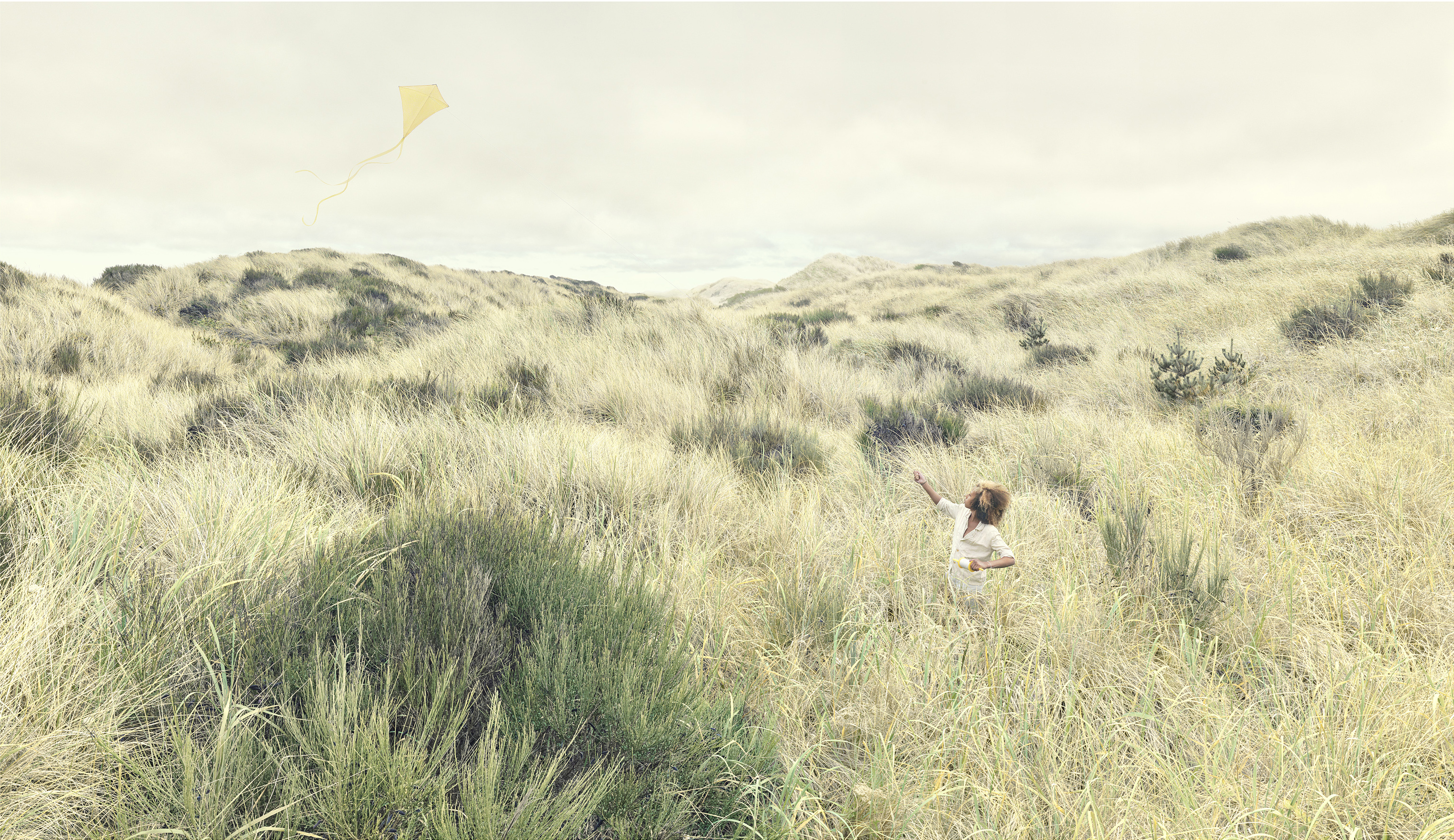 Tall Grass and Kite