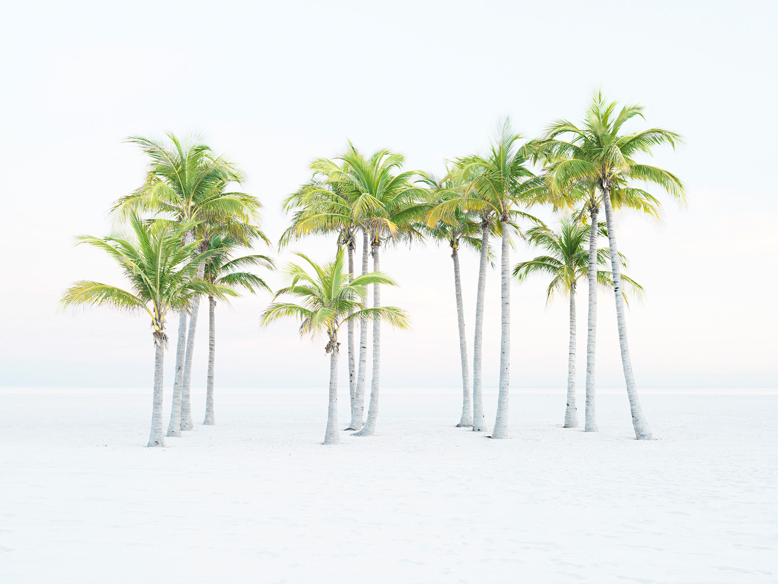 Miami-Beach-palms